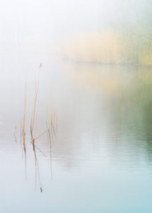 Wake Valley Pond in the mist